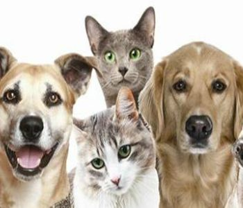 Friends of Broward Animal Care and Adoption