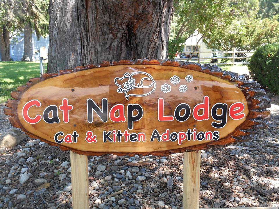Cat Nap Lodge