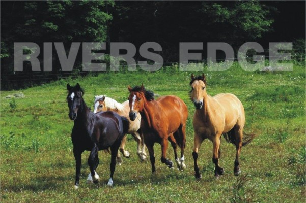 Rivers Edge Horse Rescue