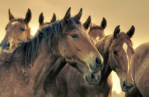 Horse Slaughter Prevention Act