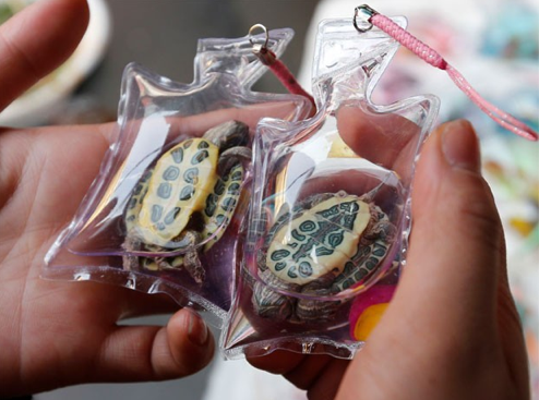 Ban Live Animals in Keychains