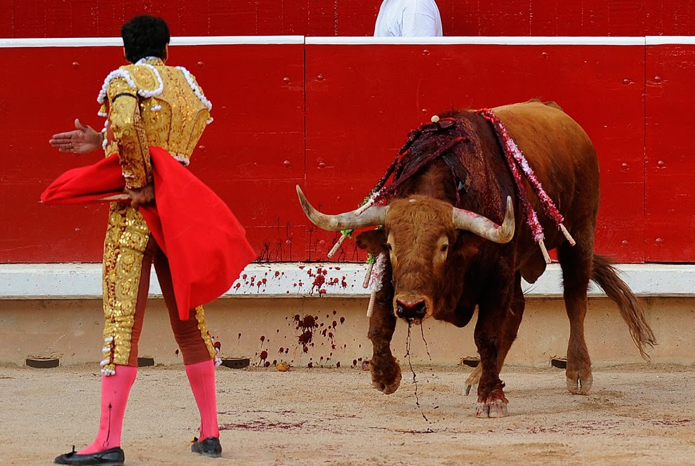 Spanish Bull Fighting