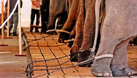 Ban Wild Animals From the Circus