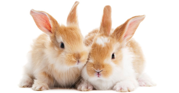 Petition to stop cosmetic testing on animals