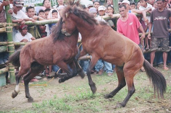 Petition to ban cruel horse fights