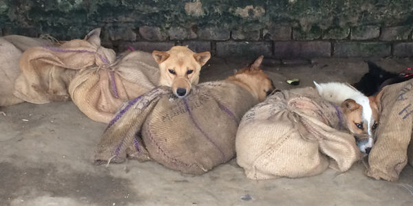 Petition to help stop the dog meat trade in India
