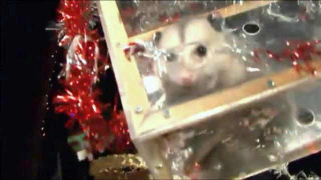 Petition to stop the possum drop in Brasstown, NC