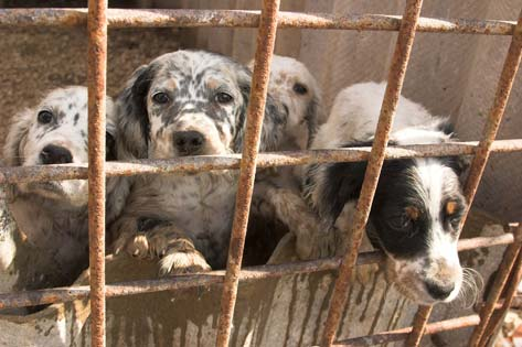 Petition to force Massachusetts to stop selling puppy mill pets at pet stores