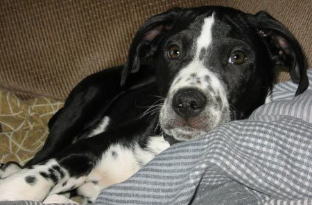 Rescues For Mixed Breed Dogs